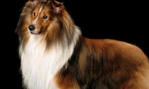 普通狗粮多少钱 选择狗爱吃的狗粮是关键
